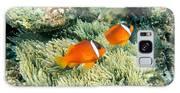 Dusky Clownfish Galaxy S8 Case