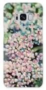 Dwarf Korean Lilac Galaxy S8 Case