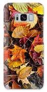 Fall Leaves On Forest Floor Galaxy Case
