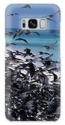 Flying Terns  On The Great Barrier Reef Galaxy S8 Case