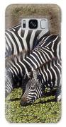 Four For Lunch - Zebras Galaxy S8 Case