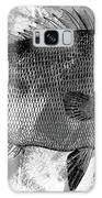 Gray Fish Galaxy S8 Case