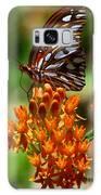 Gulf Fritillary On Butterflyweed Galaxy S8 Case