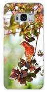 House Finch Hanging Around Galaxy S8 Case