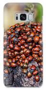 Ladybugs On Branch Galaxy Case by Garry Gay