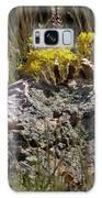 Lanceleaf Stonecrop Sedum 1 Galaxy S8 Case