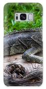 Lizard At The Zoo Galaxy S8 Case