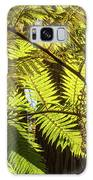Looking Up To A Beautiful Sunglowing Fern In A Tropical Forest Galaxy S8 Case