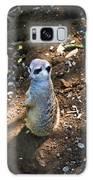 Meerkat Responding Galaxy S8 Case