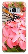 Monarch On Huneysuckle Galaxy S8 Case