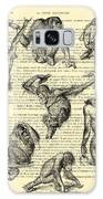 Monkeys Black And White Illustration Galaxy S8 Case