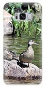 Mother Duck With Juveniles Galaxy S8 Case