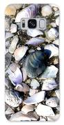 Ocracoke Shells Galaxy S8 Case