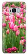 Pink Tulips At Floriade In Canberra, Australia Galaxy S8 Case