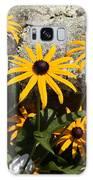 Stone Flowers Black Eyed Susan Galaxy S8 Case