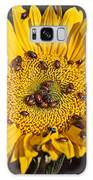 Sunflower Covered In Ladybugs Galaxy Case