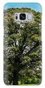 The Summer Tree Galaxy S8 Case