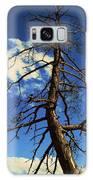 Tree At Bryce Canyon Utah. Galaxy S8 Case