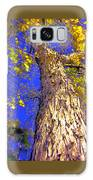 Tree In Motion Galaxy S8 Case