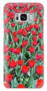 Tulips In Kristiansund, Norway Galaxy S8 Case