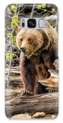 Yellowstone Grizzly Bear Galaxy Case by Christopher Arndt