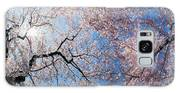 Low Angle View Of Cherry Blossom Trees Galaxy S8 Case