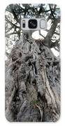 Ancient Olive Tree In The Masai Mara Galaxy S8 Case