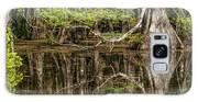 Bald Cypress Trees And Reflection, Six Galaxy S8 Case