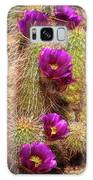Bouquet Of Beauty Galaxy Case by Rick Furmanek
