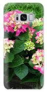 Decorative Floral Pink Hydrangeas C031619 Galaxy Case by Mas Art Studio