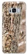 First Brown Creeper Galaxy Case by Onyonet  Photo Studios