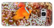 The Fiji Clownfish  Amphiprion Barberi Galaxy S8 Case