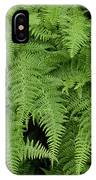 Mountain Ferns Of North Carolina IPhone Case