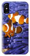 Ocellaris Clownfish IPhone Case