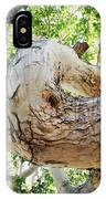 Sycamore Tree's Twisted Trunk IPhone Case