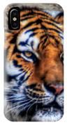 004 Siberian Tiger IPhone Case