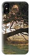 A Tree In Mississippi IPhone Case