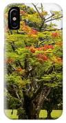 African Tulip Tree IPhone Case