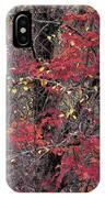Autumn's Palette IPhone Case