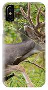 Beautiful Mule Deer Buck With Velvet Antler  IPhone Case