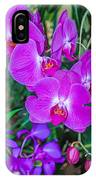 Beautiful Purple Orchid - Phalaenopsis IPhone Case