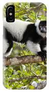 Black And White Ruffed Lemur Madagascar IPhone Case
