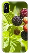 Black Raspberries 2 IPhone Case