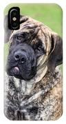 Boerboel Dog IPhone Case