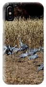 Bosque Del Apache New Mexico-sand Cranes V3 IPhone Case
