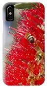 Callistemon Citrinus - Crimson Bottlebrush IPhone Case