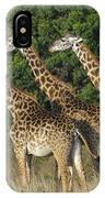 Common Giraffe IPhone Case