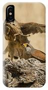 Common Kestrel Falco Tinnunculus IPhone Case
