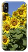 Common Sunflower Flowers Japan IPhone Case