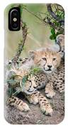 Curious Kittens IPhone Case